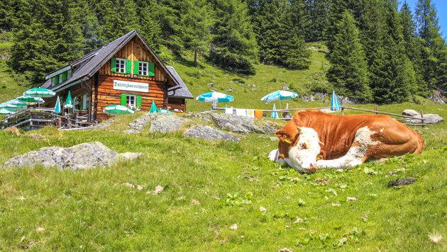 Stimmung bei Österreichs Almwirten im Keller (Bild: pure-life-pictures)