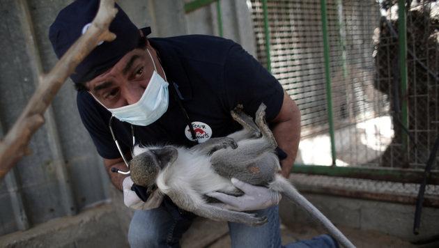 """""""Vier Pfoten"""" führen Vet-Check in Gaza durch (Bild: Vier Pfoten/2016)"""