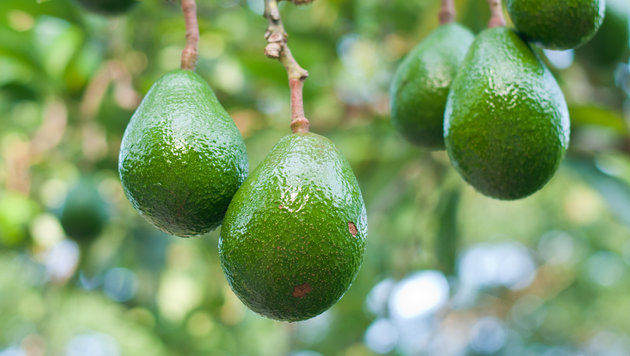 Diebstahlswelle durch teure Avocados in Neuseeland (Bild: thinkstockphotos.de)