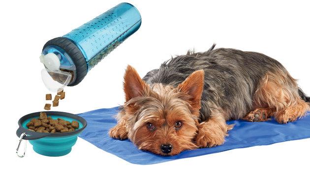 """Gewinnen Sie ein """"Abkühlungspaket"""" für Ihren Hund! (Bild: AniOne)"""