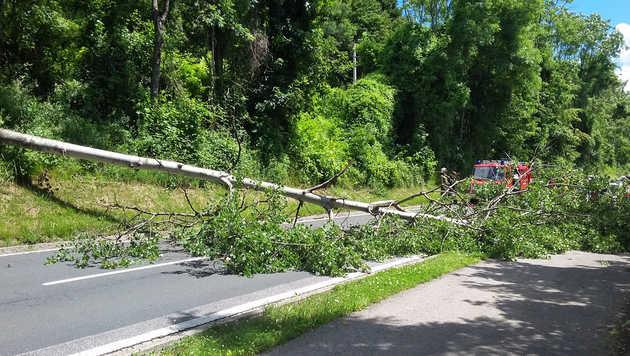 Umstürzender Baum kracht auf teuren Sportflitzer (Bild: Freiwillige Feuerwehr Töschling)