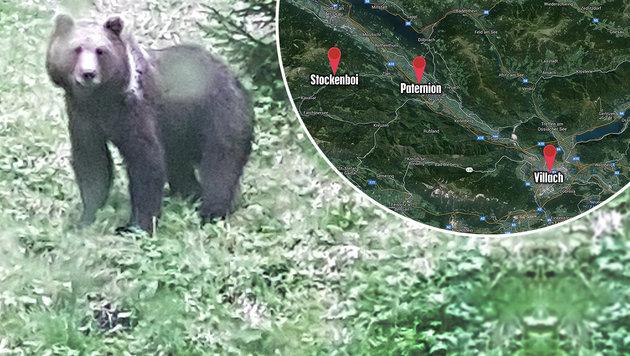 """Braunbär """"Rudolf"""" noch immer auf Reviersuche (Bild: Leopold Mayerdorfer, google.at/maps)"""