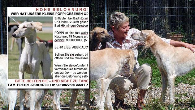 Hundehalterin zog wegen vermisstem Saluki in Wald (Bild: zVg)