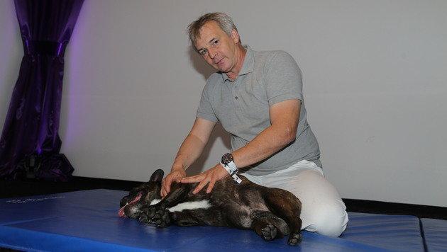 """Die Französische Bulldogge """"Pauli"""" ist bei der Massage von Manfred Kellenc eingeschlafen. (Bild: Evelyn Hronek)"""