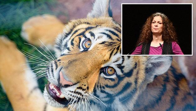 May Skaf will sich aus Protest in Berlin von Tigern fressen lassen. (Bild: AFP, EPA)