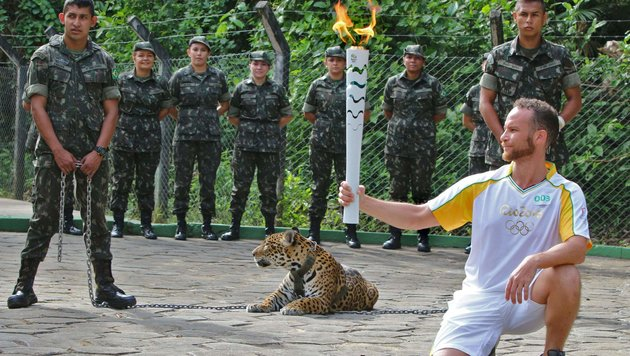 Olympia: Jaguar bei Fackel-Zeremonie erschossen (Bild: APA/AFP/Diario do Amazonas/JAIR ARAUJO)