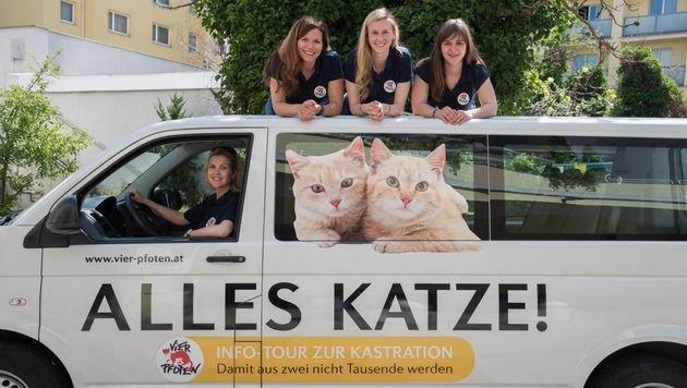 """""""Vier Pfoten"""" übergaben Katzenfallen an Tierheim (Bild: Vier Pfoten/Tibor Rauch)"""