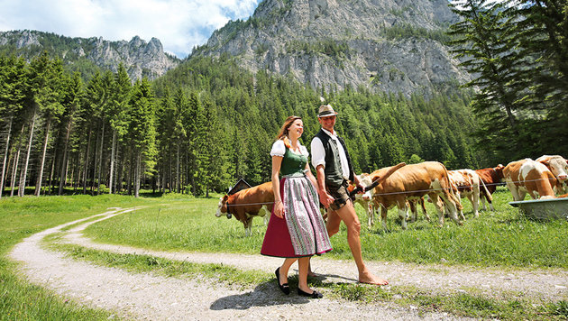 Die Kühe auf der Alm sind nicht nur schön anzuschauen, sondern auch wichtige Landschaftspflege. (Bild: Peter Tomschi)