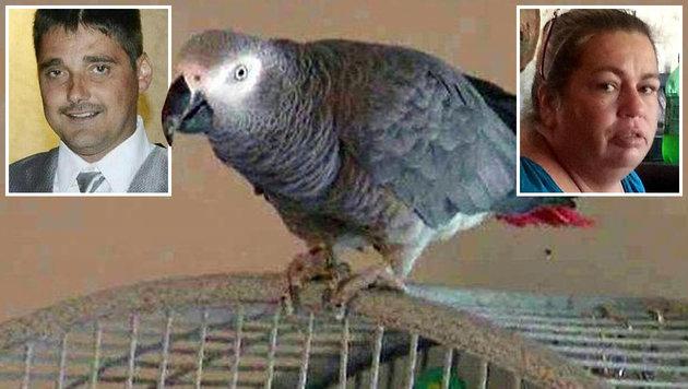 US-Gericht pr�ft Papagei als Zeuge in Mordfall (Bild: Krone)