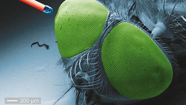 Die Kamera im Größenvergleich mit einer Fliege (Bild: pi4.uni-stuttgart.de)