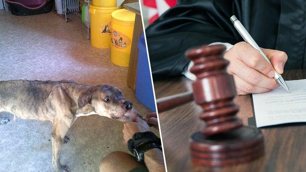 """Hund """"Zeus"""" im Juni 2014, nachdem er mit drei anderen aus dem Haus der Angeklagten gerettet wurde (Bild: Pfotenhilfe, thinkstockphotos.de)"""