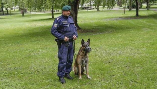 Diensthundeinspektion, Stadtpolizei, AGM- & EGS-Beamte kontrollieren weiter den gefährdeten Park. (Bild: Markus Tschepp)
