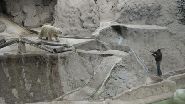 Arturo in seinem Gehege im Zoo von Mendoza (Bild: AP)
