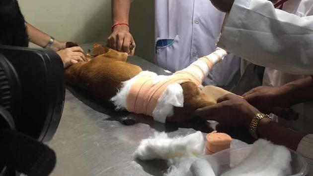 Der Hund konnte lebend geborgen und medizinisch behandelt werden. (Bild: facebook.com/Shravan Krishnan)