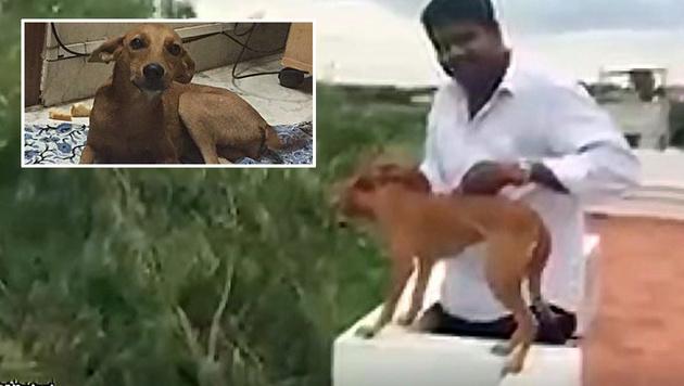 Happy End: Hund überlebt grausamen Wurf von Dach (Bild: facebook.com/Antony Rubin, twitter.com/iamkarthikd)