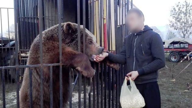 Tierschützer retten einzigen Zirkusbären Polens (Bild: Viva! Foundation)