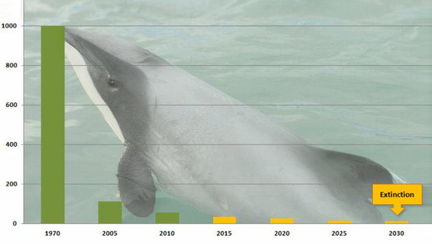 Seltenster Delfin der Welt vom Aussterben bedroht (Bild: NABU)