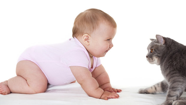 Tipps und Tricks: Wenn Katzenhalter Eltern werden (Bild: thinkstockphoto.de)