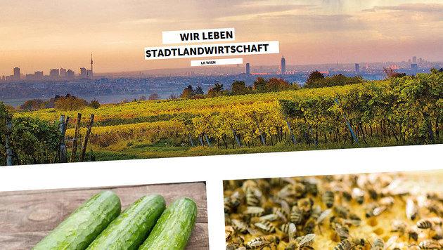 Frisches vom Wiener Bauern: App hilft bei Suche (Bild: stadtlandwirtschaft.wien)