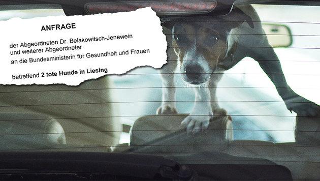 """Hunde in Auto verendet: """"Besitzerin ist Ex-Grüne"""" (Bild: thinkstockphotos.de (Symbolbild), """"Krone""""-Grafik)"""