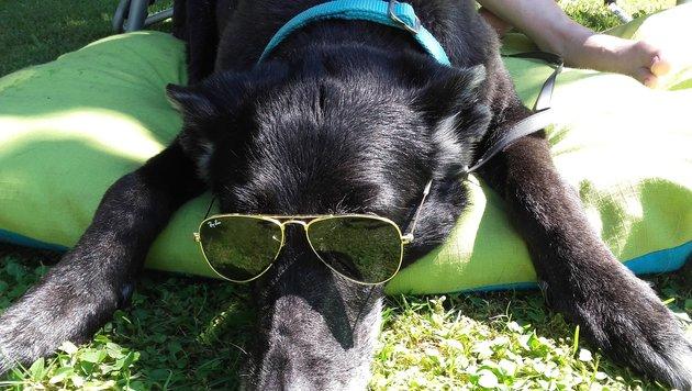 Haustier & Co: Wir suchen die tollsten Tierbilder! (Bild: Sabrina Kopacek)