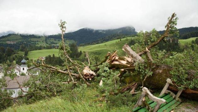 Die einst stolze Eiche in St. Koloman kippte durch die starken Sturmböen am Mittwoch um. (Bild: FF St. Koloman)