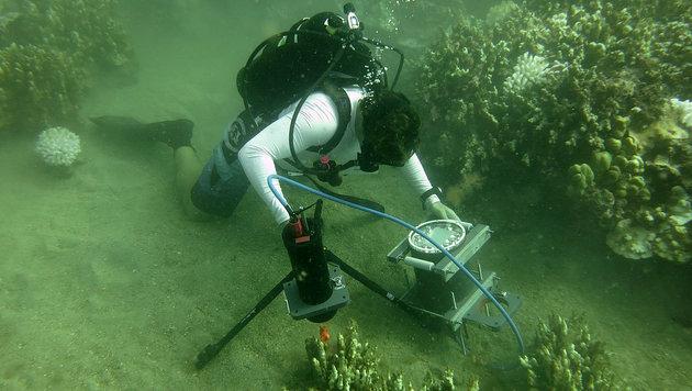 Das neuartige Unterwasser-Mikroskop im Einsatz (Bild: UCSD/Emily La.A. Kelly (CC BY-ND))