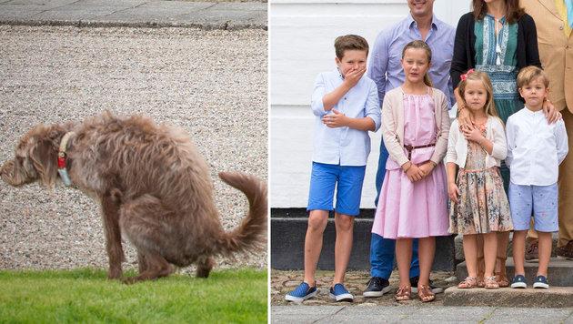Ein Hund verrichtete ausgerechnet beim offiziellen Fototermin der Dänen-Royals sein Geschäft. (Bild: face to face)