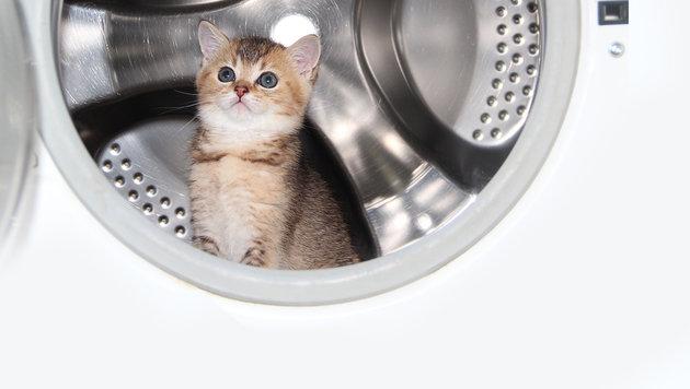 Kätzchen aus laufender Waschmaschine gerettet (Bild: thinkstockphotos.de)
