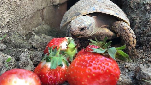 Haustier & Co: Wir suchen die tollsten Tierbilder! (Bild: Patricia Scheichenberger)