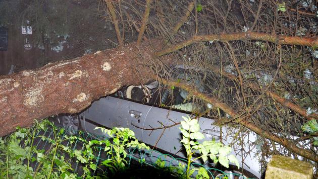 In Karlstein stürzte ein Baum auf ein Auto. (Bild: APA/BFK WAIDHOFEN A. D. THAYA/STEFAN MAYER)