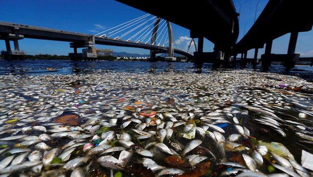 Die Bucht von Guanabara in Rio kippt regelmäßig in eine stinkende Kloake. (Bild: Kronen Zeitung)