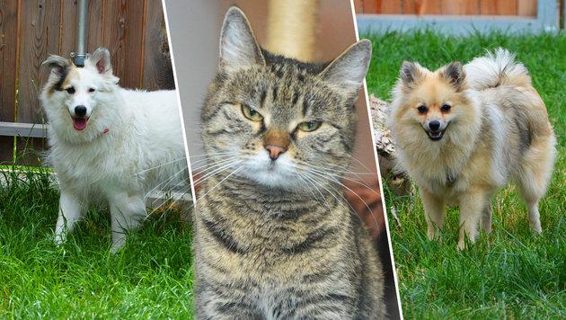 Drei Tiere, ein Schicksal: Sie wurden ausgesetzt, weil sie im Urlaub störten. (Bild: TierQuarTier)