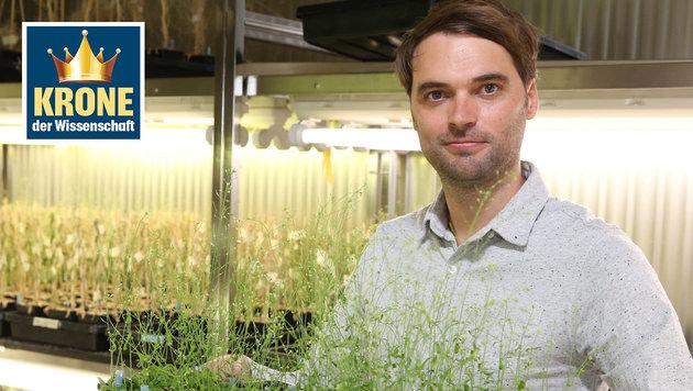 """Wiener Forscher sind Pflanzenwachstum auf der Spur (Bild: Zwefo, """"Krone"""")"""