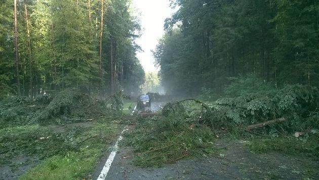 Umgestürzte Bäume in Hohlbach (Bild: Gaich)