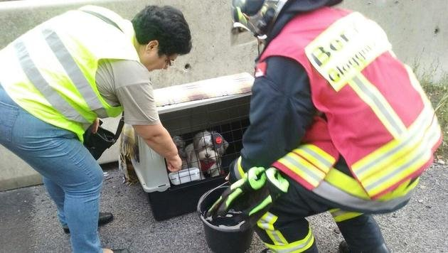 Feuerwehrleute versorgten Hunde nach Unfall in NÖ (Bild: Einsatzdoku.at/Rauch)