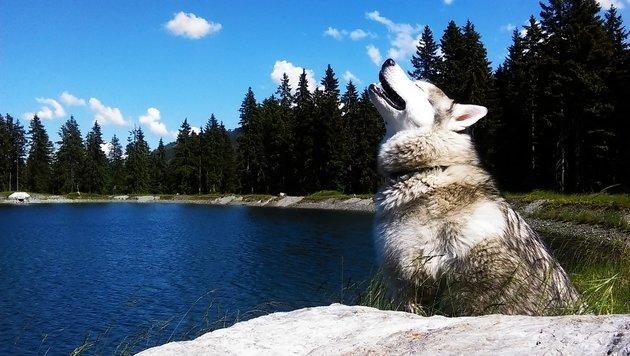 Haustier & Co: Wir suchen die tollsten Tierbilder! (Bild: Sabine Kogler)