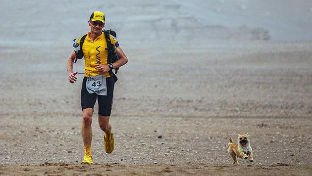 Streuner-Hündin erobert Herz von Extremsportler (Bild: crowdfunder.co.uk/bring-gobi-home)