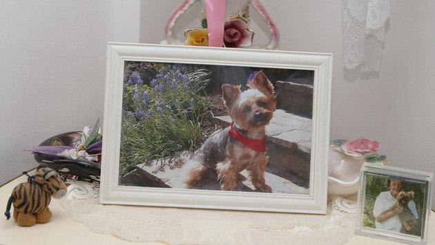 """Überall in der Wohnung stehen immer noch Fotos von Yorkie """"Stella"""". (Bild: Zwefo)"""