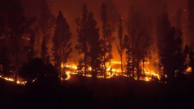 Deutscher wegen Waldbrand auf La Palma in U-Haft (Bild: APA/AFP/DESIREE MARTIN)