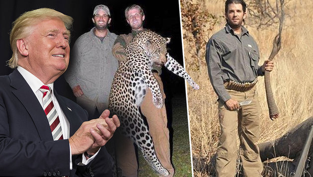 Trumps Söhne Donald Jr. und Eric könnten ihrem Vater im Wahlkampf noch schaden. (Bild: Hunting Legends, APA/AFP/GETTY IMAGES/Scott Eisen)