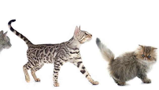 Fakt oder Vorurteil? Wie Katzen wirklich sind (Bild: thinkstockphotos.de)