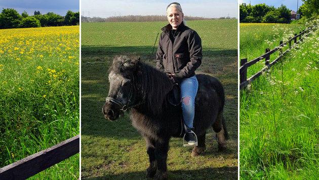 """Verzweifelte Suche nach Pony """"Nala"""" aus Stockerau (Bild: zVg, thinkstockphotos.de)"""