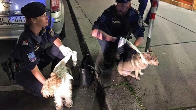 Die beiden Hunde wurden von den Polizisten eingefangen. (Bild: LPD Wien)