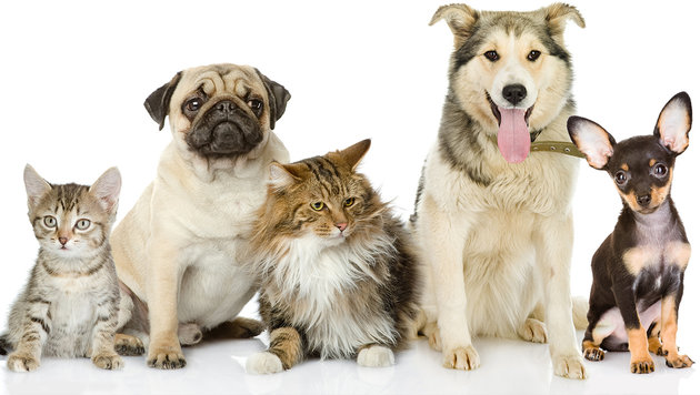Das unterscheidet Hunde- von Katzen-Liebhabern (Bild: thinkstockphotos.de)