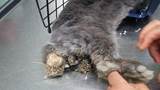 Das Kaninchen war stark mit Kot verklebt und abgemagert. (Bild: WTV/Stefanie Hummer)