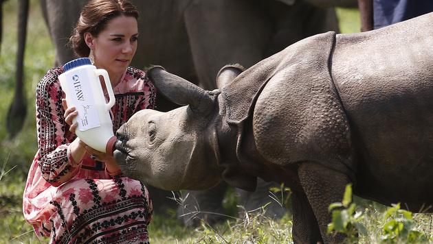 """Zu Hause streichelt Kate Hund """"Lupo"""". Bei der Indienreise kümmerte sie sich um ein Nashornbaby. (Bild: AFP)"""
