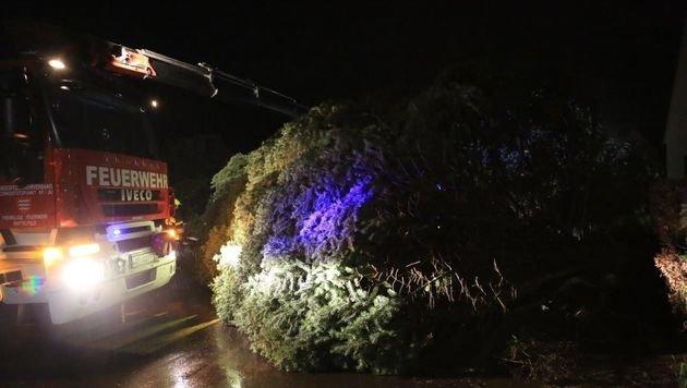 Die Feuerwehr musste Straßen von Bäumen befreien. (Bild: Thomas Zeiler)