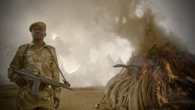 """The Ivory Game"" (Bild: Netflix)"