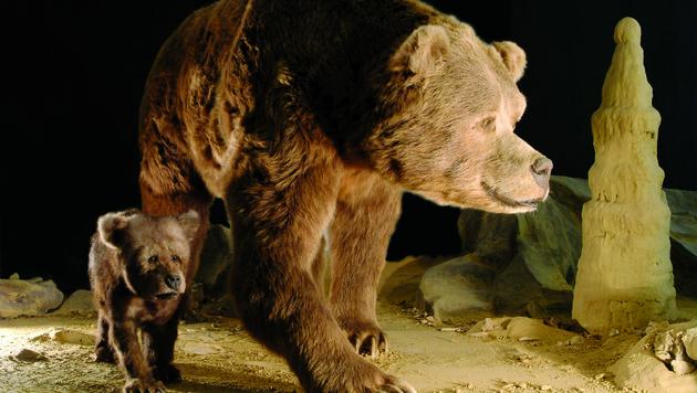 Das Modell eines Höhlenbären im deutsches Höhlenmuseum Iserlohn (Bild: Deutsches Höhlenmuseum Iserlohn)